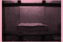 Drogas: mujeres cis y trans, las más criminalizadas