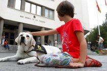 Impulsan el uso de perros de asistencia judicial para casos de abuso sexual en la infancia