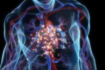 """Infartos de miocardio en varones cada vez más jóvenes: """"las seis primeras horas son cruciales"""""""